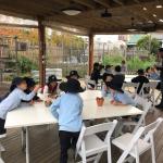 Stanmore Public School Kindergarten Visit Pocket City Farm