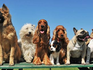 Stanmore Public School Dogs at School