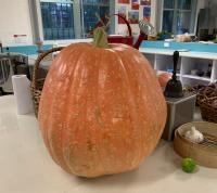 Stanmore Public School Giant Pumpkin