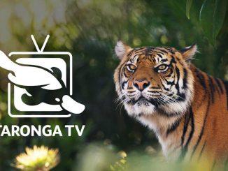 Stanmore Public School Taronga TV